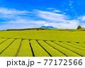 静岡県富士市の美しい茶畑 77172566