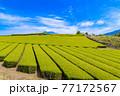 静岡県富士市の美しい茶畑 77172567