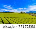 静岡県富士市の美しい茶畑 77172568