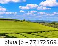 静岡県富士市の美しい茶畑 77172569