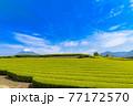 静岡県富士市の美しい茶畑 77172570