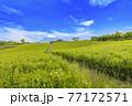 静岡県富士市の美しい茶畑 77172571