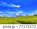 静岡県富士市の美しい茶畑 77172572