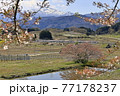春の山形新幹線と残雪の吾妻連峰 77178237