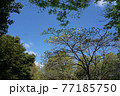 公園の春風景  77185750