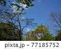 公園の春風景  77185752