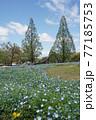 公園の春風景  77185753