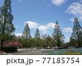 公園の春風景  77185754