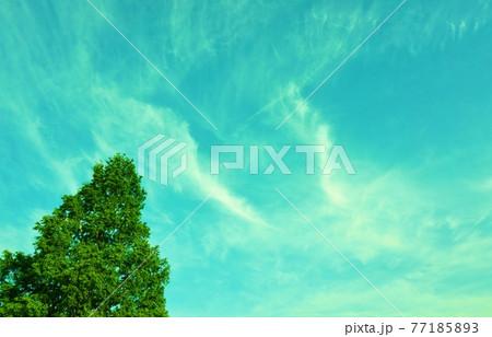 水色の空に流れる2本の白い雲と新緑の針葉樹 77185893