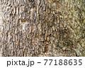 樹木 77188635