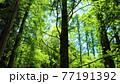 東京で見つけた新緑の森林浴 77191392