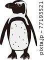 横向きのケープペンギン 77193521