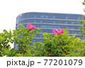 花 バラ 葉 77201079