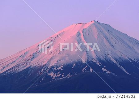 (山梨県)朝日に照らされ淡く染まる富士山 77214503