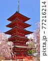 青森県弘前市 金剛山最勝院の五重の塔としだれ桜 77216214