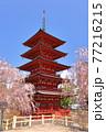 青森県弘前市 金剛山最勝院の五重の塔としだれ桜 77216215