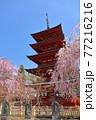 青森県弘前市 金剛山最勝院の五重の塔としだれ桜 77216216