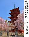青森県弘前市 花吹雪の金剛山最勝院五重の塔としだれ桜 77216217