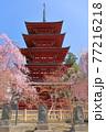 青森県弘前市 金剛山最勝院の五重の塔としだれ桜 77216218