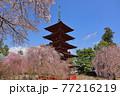 青森県弘前市 金剛山最勝院の五重の塔としだれ桜 77216219