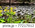 群馬県 春の赤城自然園 77217012