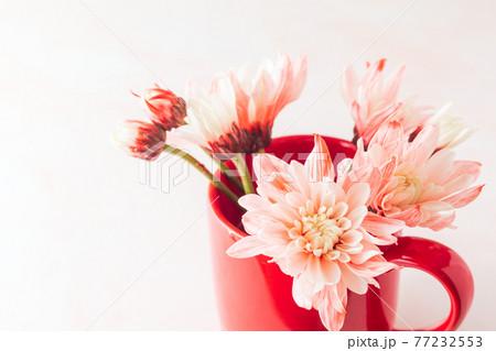 赤いマグカップに入ったピンクの花 77232553