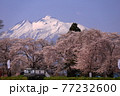 青森県弘前市 堀越城跡の桜と岩木山 77232600