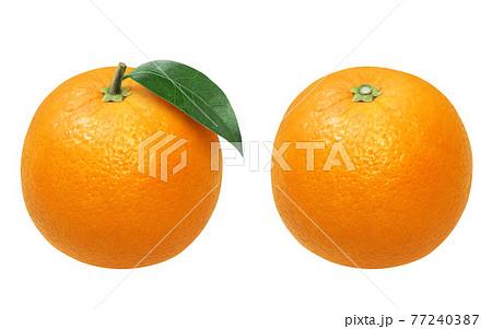 オレンジ イラスト リアル 77240387