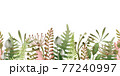 Green fern and forest herb seamless border. Watercolor illustration. Natural organic herbs in elegant ornament. Hand drawn organic plant border. Elegant seamless decor. Isolated on white background 77240997