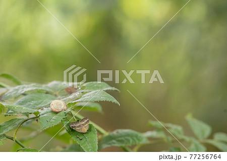 夏の木漏れ日と葉で休むかたつむりと蛾 77256764