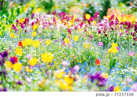 アカオハーブ&ローズガーデンの花 77257336