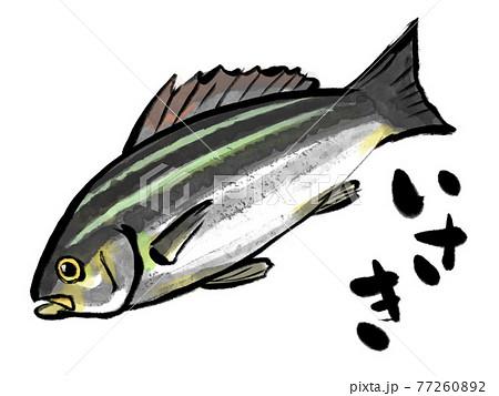 水彩画風イサキと筆文字 77260892