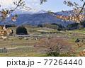春の山形新幹線と残雪の吾妻連峰 77264440