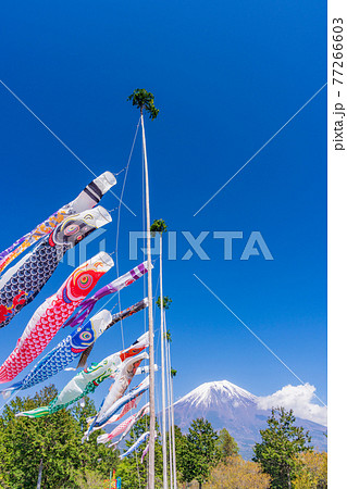 (静岡県)朝霧高原の空を泳ぐ、こいのぼり 77266603