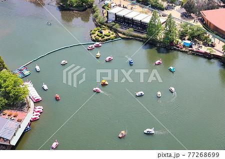愛知県名古屋市 東山動物園のスワンボート池 77268699