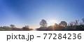 「埼玉県」見沼田んぼの朝霧の風景 77284236