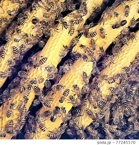 巣蜜 はちみつ コムハニー ハニーコム ミツバチ 素材 背景 77285570
