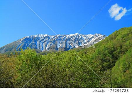 【鳥取県】鍵掛峠から見た冠雪した大山と新緑  77292728