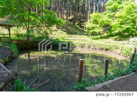 多峰主山に雨乞池(奥武蔵自然公園) 77293907