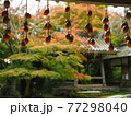 京都洛西金蔵寺の秋 77298040