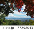 京都洛西金蔵寺の秋 77298043