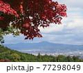 京都洛西金蔵寺の秋 77298049