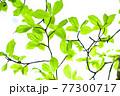 新緑 エコ 77300717