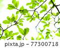 新緑 エコ 77300718
