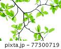 新緑 エコ 77300719