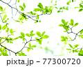 新緑 エコ 77300720