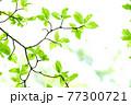 新緑 エコ 77300721