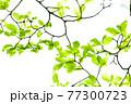 新緑 エコ 77300723
