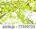 新緑 エコ 77300724