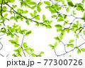新緑 エコ 77300726